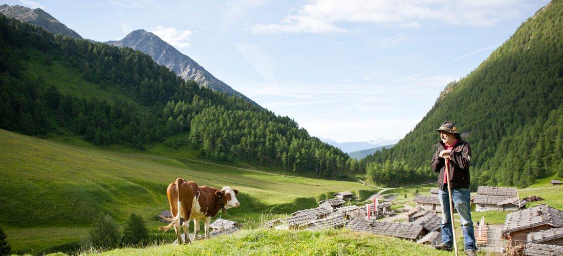 Malga Fane - il pittoresco alpeggio